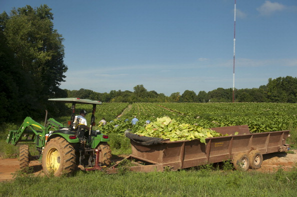 impact local farmers